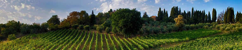 Vino Biologico di Qualità prodotto in Toscana - Acquista Online