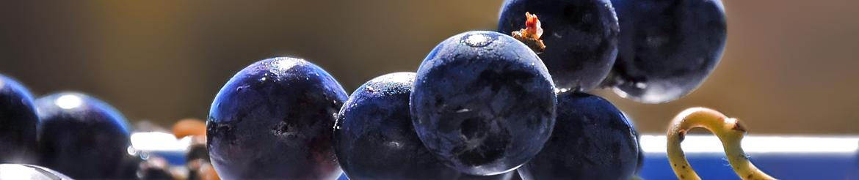 Vino Rosso Biologico di Qualità prodotto in Toscana - Acquista Online