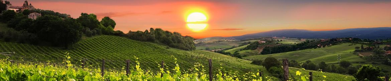 Collezioni Vino Biologico di Qualità - Toscana - Acquista Online