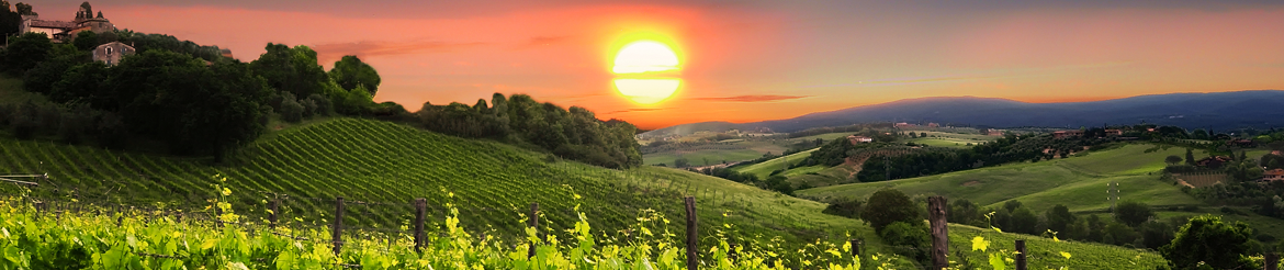 Quality Organic Wine Collections - Tuscany - Buy Online