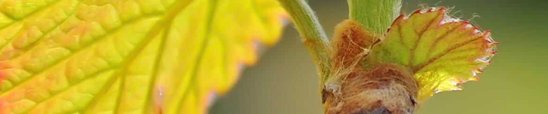 Collezioni Vino Biologico di Qualità - Tg. S - Acquista Online