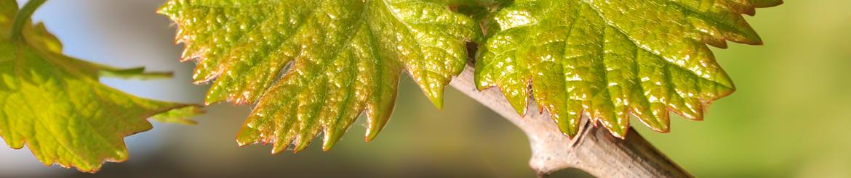 Collezioni Vino Biologico di Qualità - Tg. L - Toscana - Compra Online