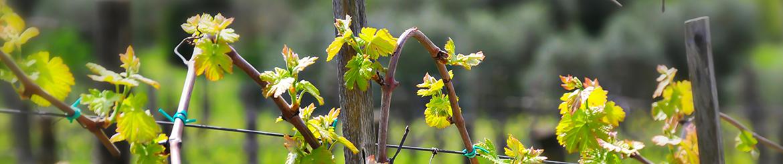 Confezioni Vino Biologico di Qualità - Tg. S - Acquista Online