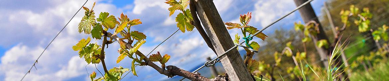 Confezioni Vino Biologico di Qualità - Tg. M - Acquista Online