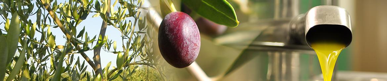 Olio EVO Biologico - prodotto in Toscana - Acquista Online