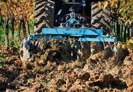 Organic fertilization: the green manure
